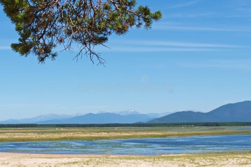 Berglandschap met blauwe rivier en een pijnboomtak stock afbeeldingen