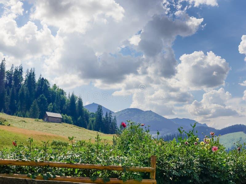 Berglandschap met bloemen, hayfield en huishouden de bouw royalty-vrije stock afbeeldingen