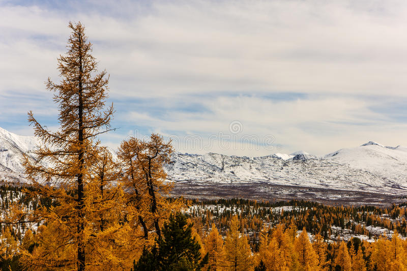 Berglandschap met de herfstlariksen stock afbeelding