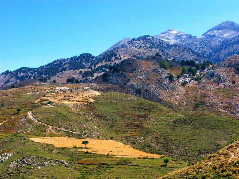 Berglandschap met eenzame boom op geel gebied royalty-vrije stock afbeeldingen