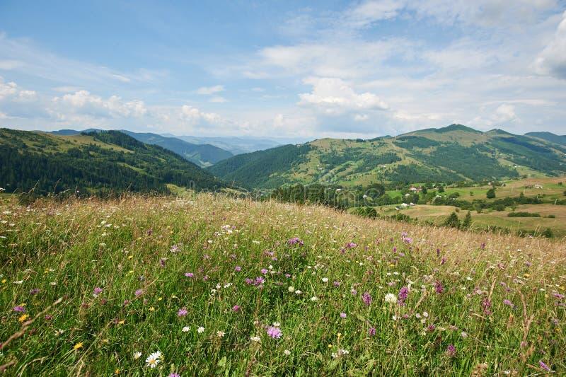 Berglandschap met gras en bloemen in de voorgrond Zonnige dag De Karpaten, de Oekra?ne royalty-vrije stock foto