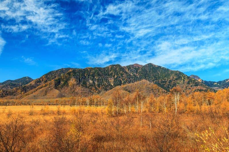 Berglandschap met het bos van de pijnboomboom in de herfstseizoen, Nikko, royalty-vrije stock foto