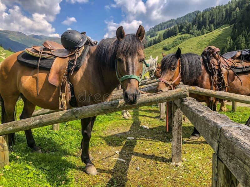 Berglandschap met het weiden van paarden in Oostenrijk royalty-vrije stock foto's