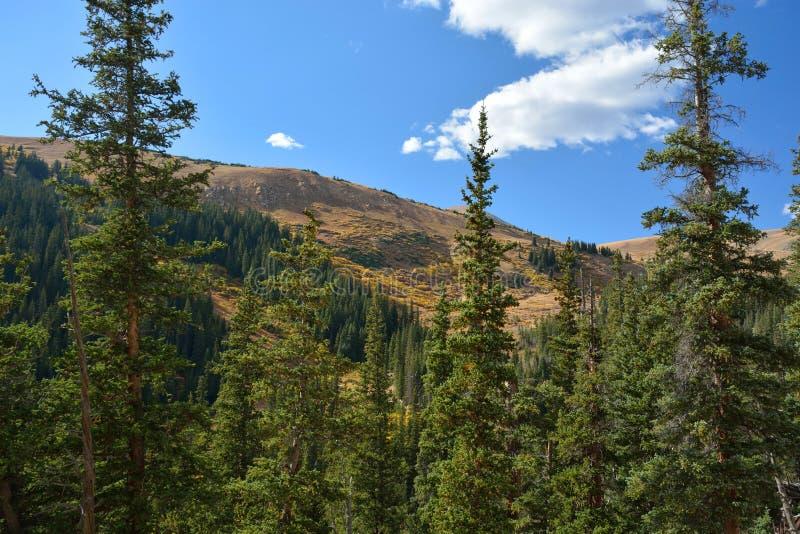 Berglandschap met pijnboombomen stock afbeelding