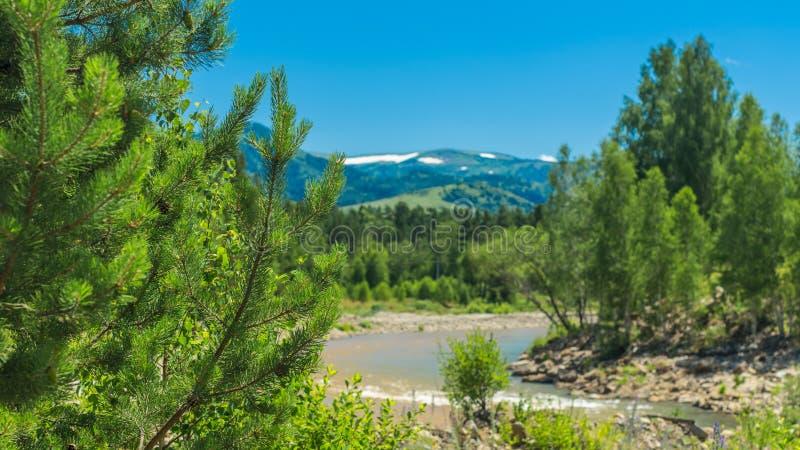 Berglandschap op een zonnige de zomerdag Blauwe Hemel, Witte Wolken die, Rivier het Bespatten, over Rotsen, Evergreens en Bomen s stock foto