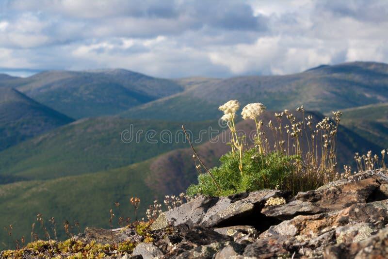 Berglandschap op Magadan-gebied royalty-vrije stock foto