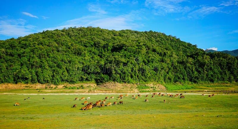 Berglandschap van Centrale Hooglanden, Vietnam royalty-vrije stock afbeeldingen