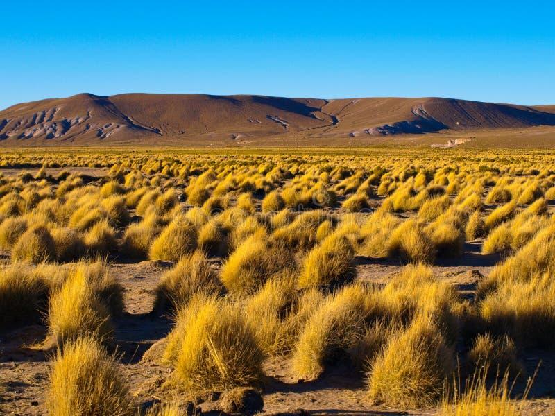 Berglandschap van Cordillera DE Lipez binnen royalty-vrije stock fotografie