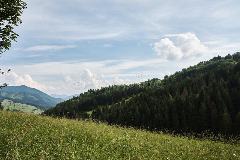Berglandschap van Weinig Fatra met bossen, heuvels en gras stock foto's