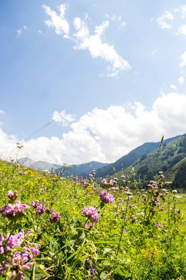 Berglandskap av den Kaskelen klyftan i Tien-Shan Mount royaltyfri foto