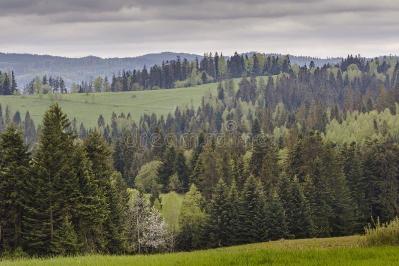Berglandskap i vår Slinga som leder till och med gräsplanen va royaltyfri fotografi