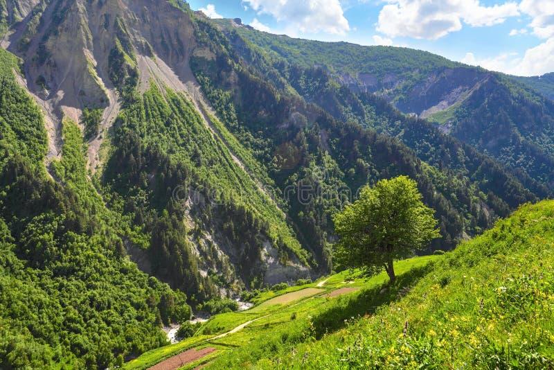 Berglandskap med det gröna trädet på kullen arkivbild