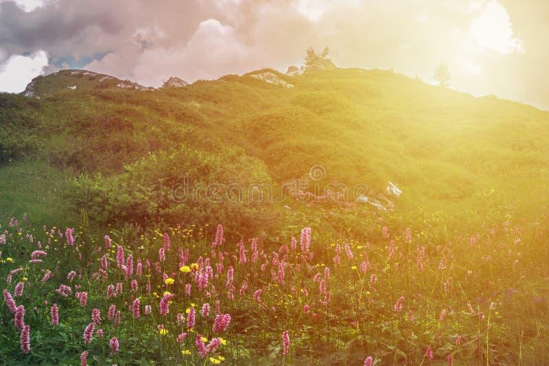 Berglandskap med flawer och solnedgång i Valsabia, Italien royaltyfri bild