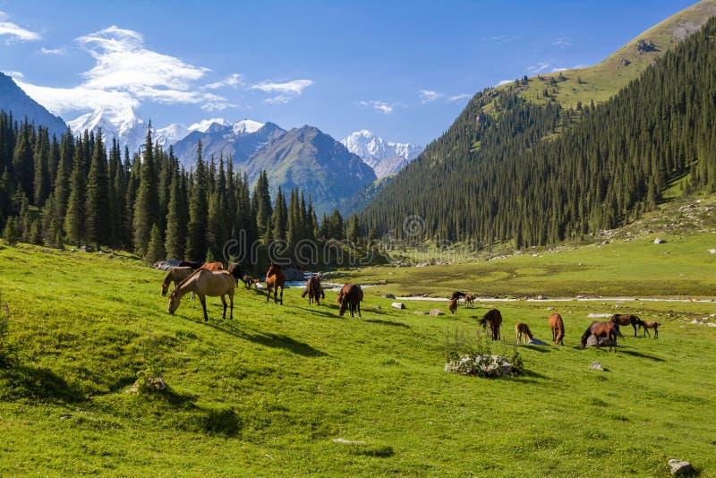 Berglandskap med flocken av hästar arkivbild