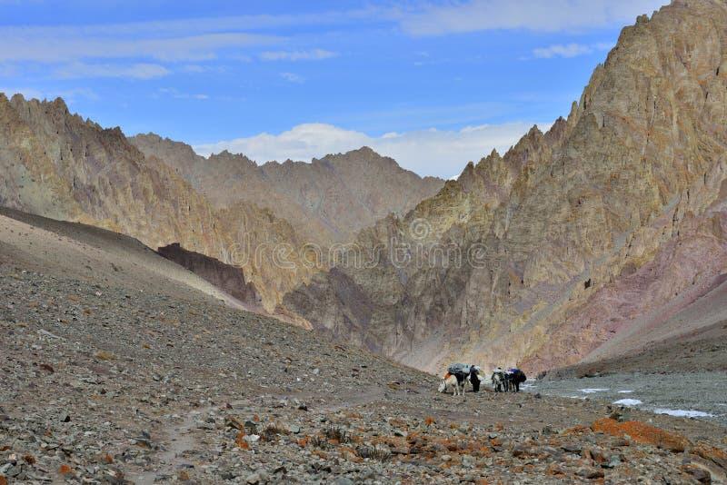 Berglandskap med hästar och skickliga ryttaren arkivfoto