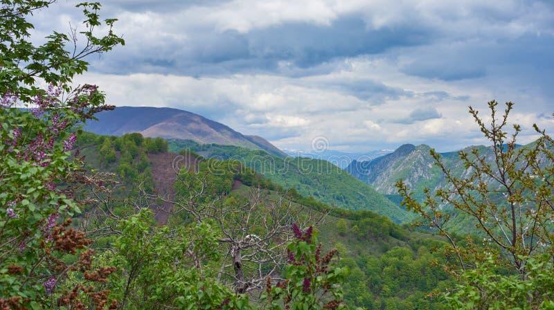 Berglandskap med lila blommor i förgrunden fotografering för bildbyråer