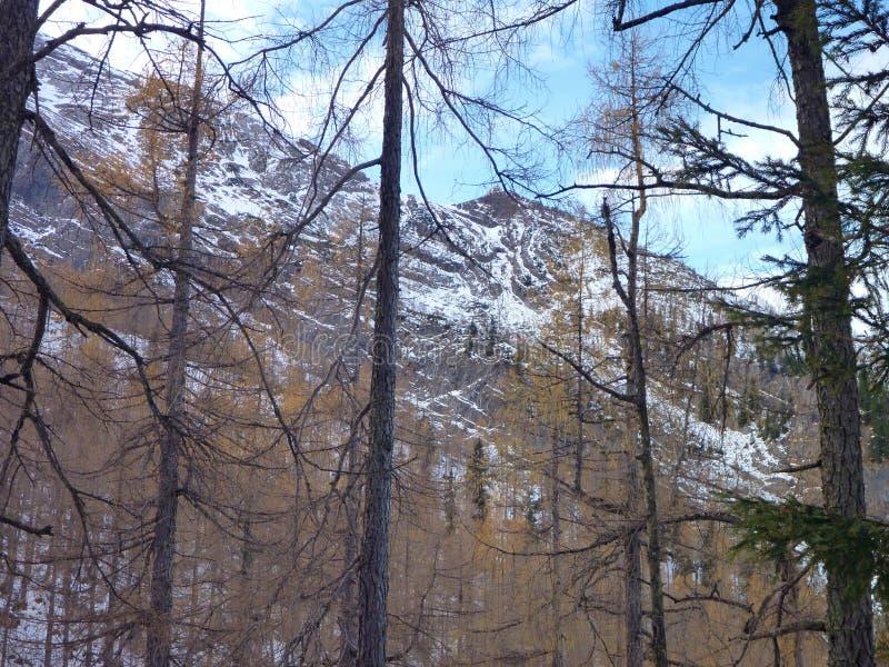 Berglandskapet i början av vintern berchtesgaden in arkivfoton