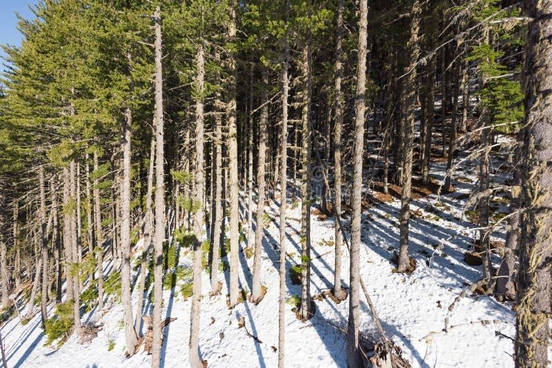Berglandskapet i frostig dag för solig vinter med blått gör klar himmel fotografering för bildbyråer
