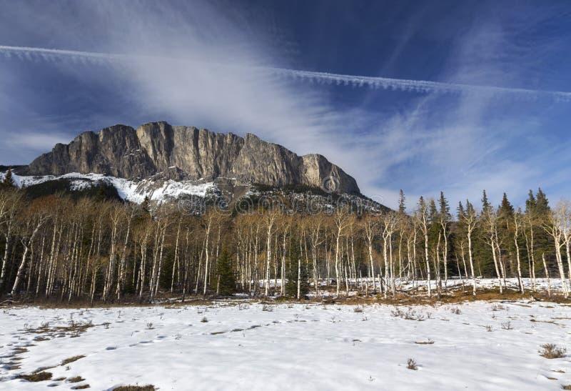 Bergmaximum Aspen Forest Kananaskis Country Alberta Foothills Kanada arkivbild