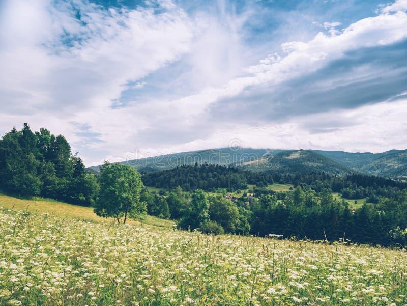 Bergopen plek met witte bloemen wordt behandeld die royalty-vrije stock foto