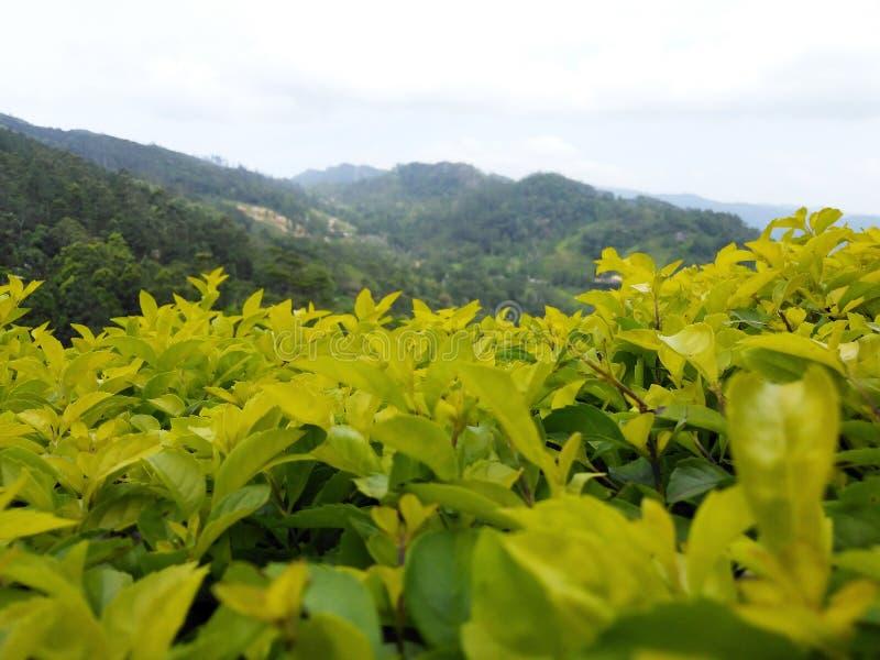 Bergopwaartse berg in Sri Lanka met natuurlijk licht royalty-vrije stock afbeelding