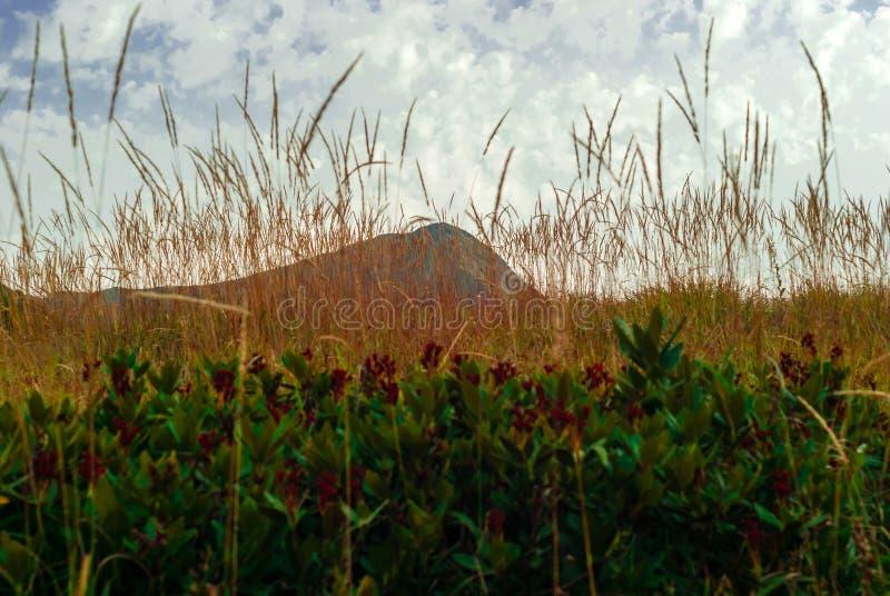 bergpiek nauwelijks zichtbaar achter de aartjes van droog gras en struikgewas van rododendron in de voorgrond royalty-vrije stock afbeeldingen