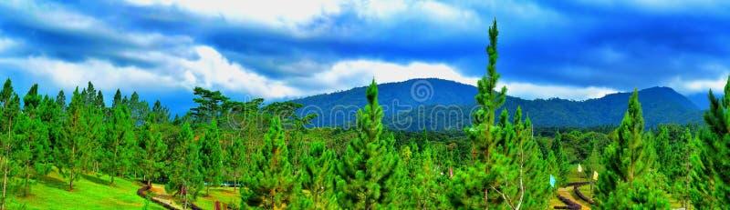 Bergpijnbomen royalty-vrije stock fotografie