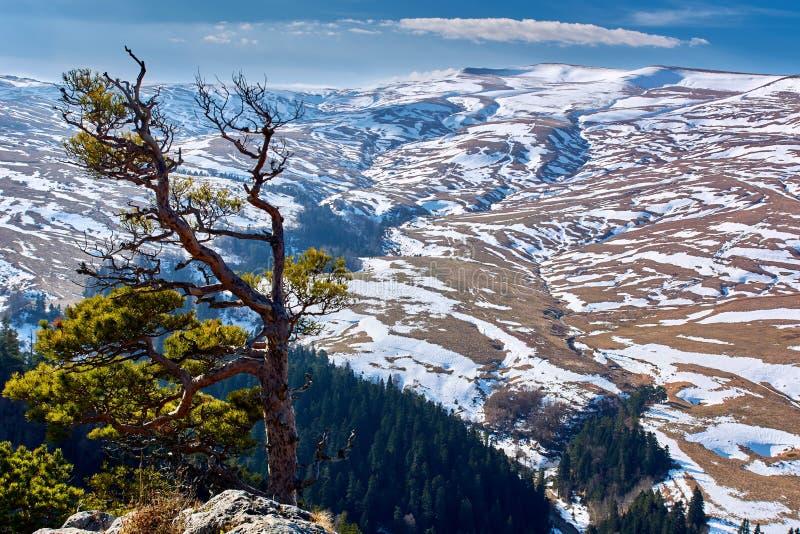 Bergplatå av Lago Naki Nordliga Kaukasus, Ryssland royaltyfri fotografi