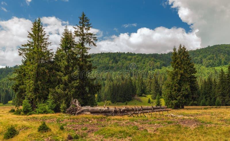 Bergplat?vegetation p? en sommardag fotografering för bildbyråer