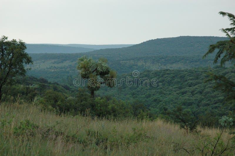 Bergplats i Sydafrika och dalen arkivbild