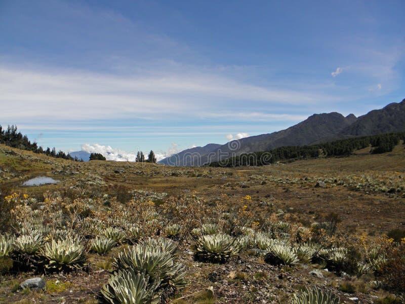 Bergpririe nära av Merida, Venezuela royaltyfri foto