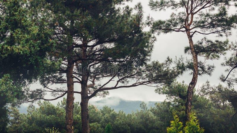 Bergrand in een kader van bomen in concept van het foregroundin het bewolkte weer wereldvrijheid en reis stock afbeelding