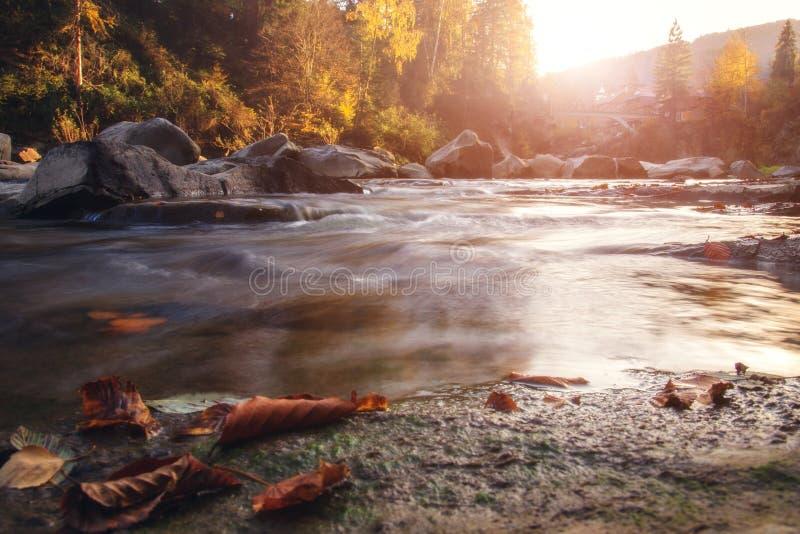 Bergrivier in de herfsttijd Rotsachtige Kust Kleurrijk bos stock afbeelding