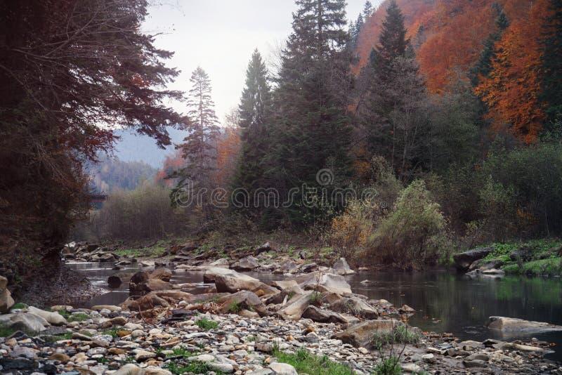 Bergrivier in de herfsttijd Rotsachtige Kust Kleurrijk bos stock foto