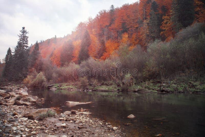 Bergrivier in de herfsttijd Rotsachtige Kust Kleurrijk bos stock foto's