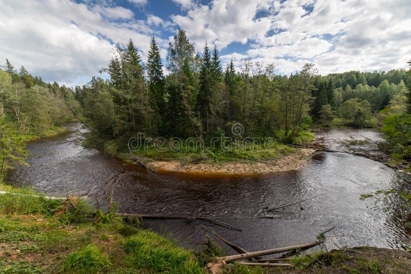 Bergrivier in de zomer door bos wordt omringd dat stock afbeelding