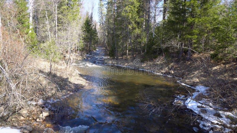Bergrivier die onder bos met smeltende sneeuw in de lente stromen media De de lentevloed vult bergrivieren die toevloeien stock foto's