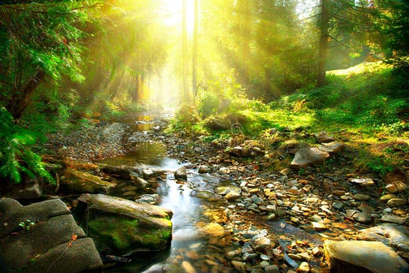 Bergrivier in het midden van groen bos stock fotografie