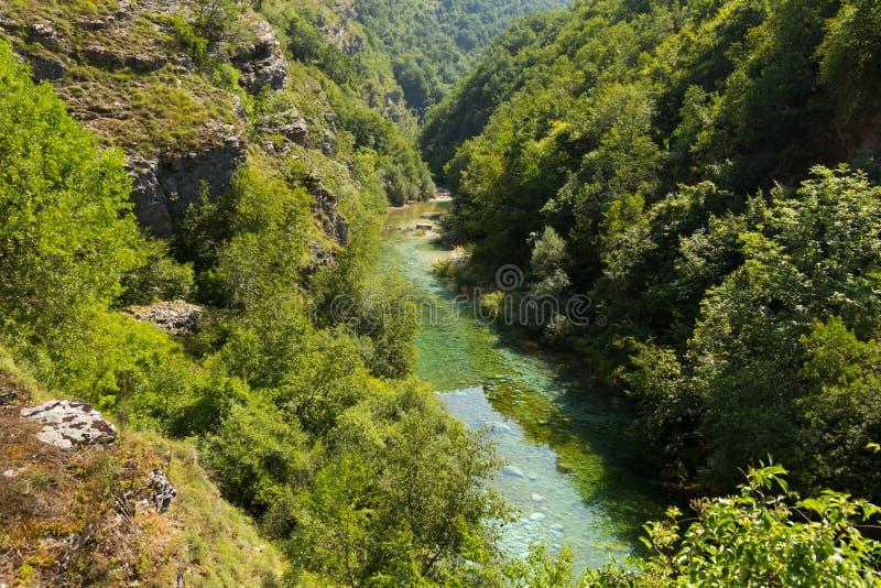 Bergrivier in het midden van groen bos stock foto's