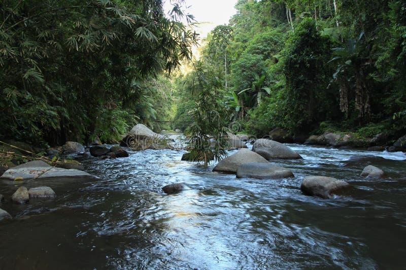 Bergrivier onder het wildernis en bamboestruikgewas royalty-vrije stock afbeelding