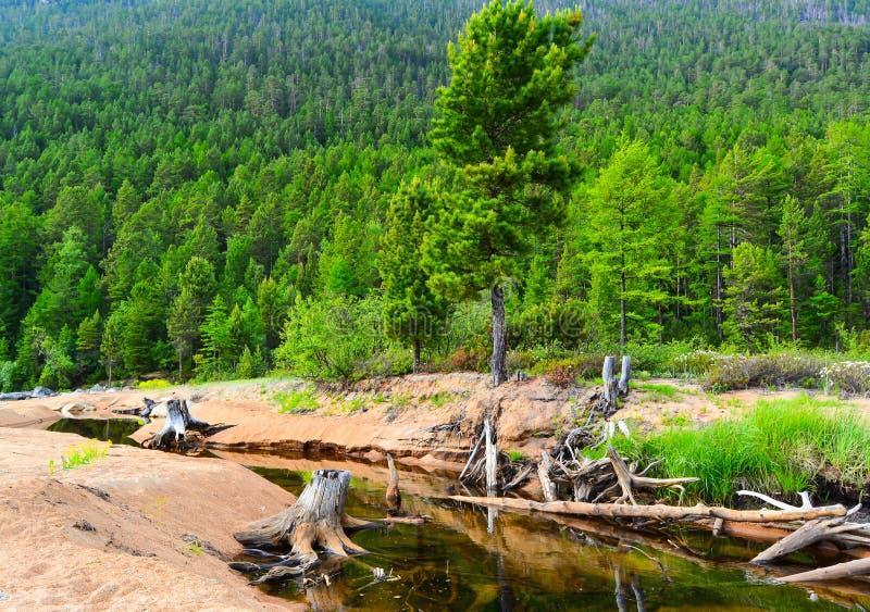 Bergrivier op Meer Baikal stock afbeeldingen