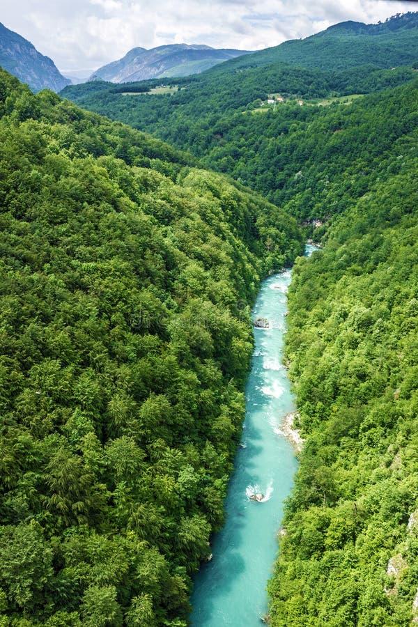 Bergrivier Tara en bos, Montenegro stock foto's