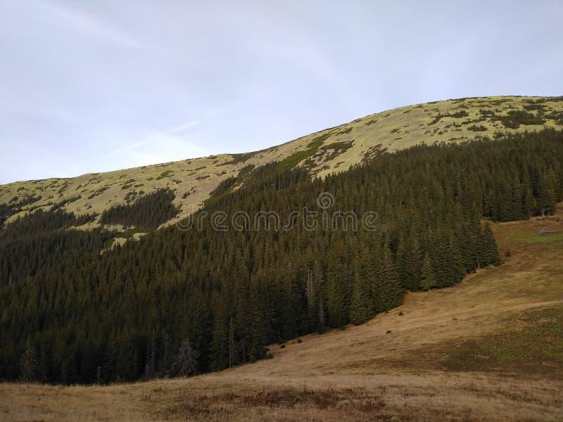 Bergrutt som monterar Sinyak från Bukovel Gorgany, ukrainska Carpathians arkivbild