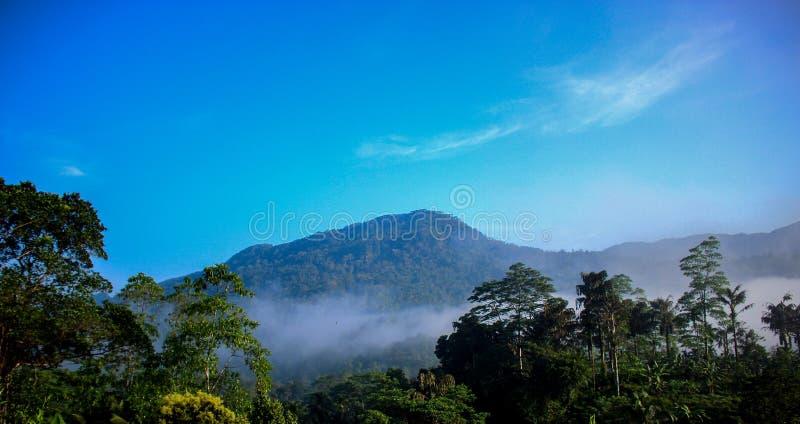 Bergsikt av sinharajaregnskogen royaltyfri foto