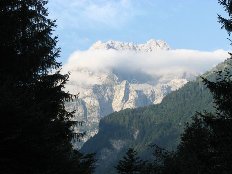 Bergsikt från pinjeskog fotografering för bildbyråer