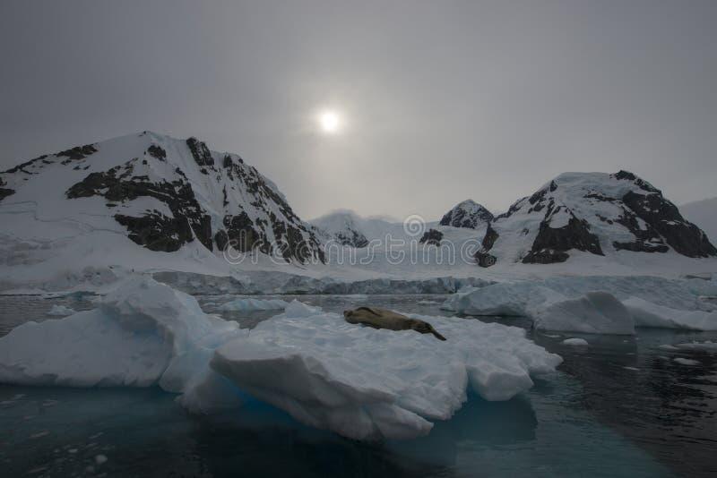 Bergsikt i Antarktis royaltyfri fotografi