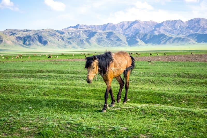 Bergsikt med hästen på grönt gräs royaltyfria foton