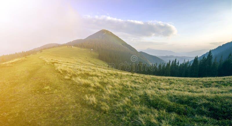 Bergsikt på ljus solig sommardag Grön gräs- dal, mörk prydlig skog och maximum för högt berg på klar blå himmel på gryning royaltyfria foton