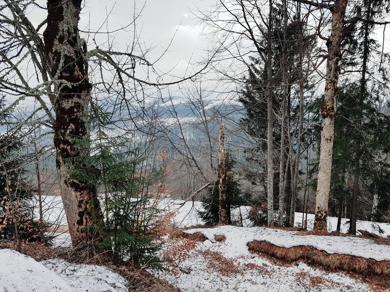 Bergsikten i Carpathians, Bukovel skidar semesterorten, Ukraina royaltyfri foto