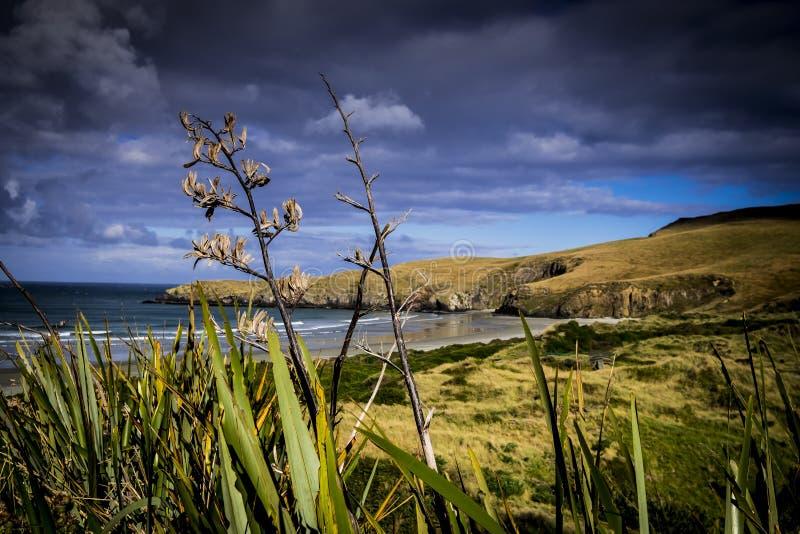 Bergsikter, strömmar och sjöar av Nya Zeeland D Y arkivbild